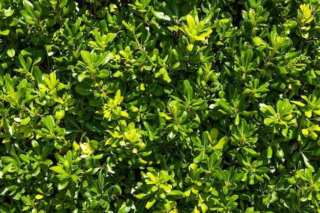 Liście zielone tło. zielone liście w ogrodzie