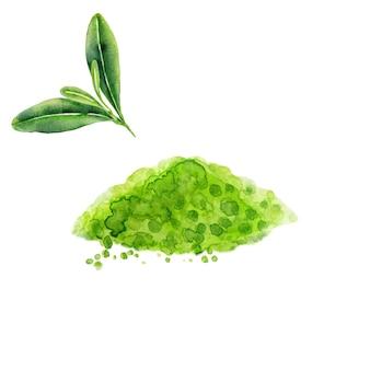Liście zielonej herbaty i proszek matcha na białym tle