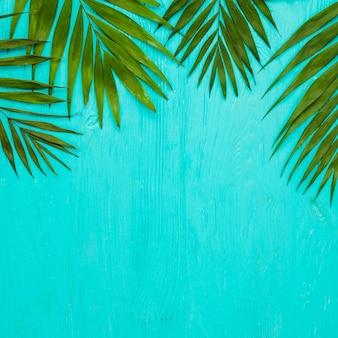Liście zielonej świeżej rośliny tropikalnej
