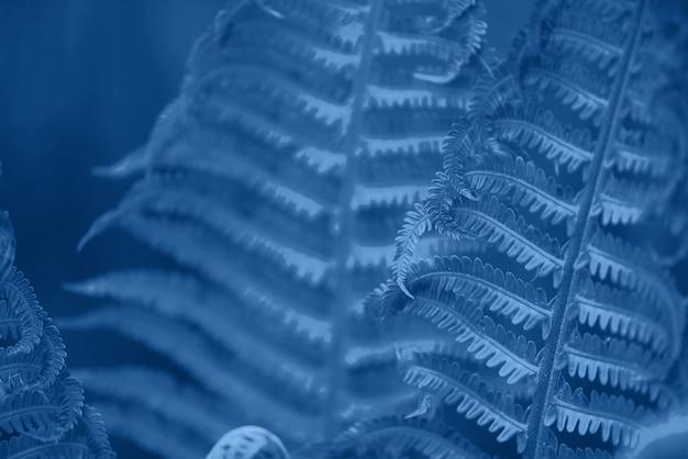 Liście zielonych paproci. naturalne liście w kolorze monochromatycznym tle. modny niebieski i spokojny kolor. kwiatowy wzór. koncepcja natury.