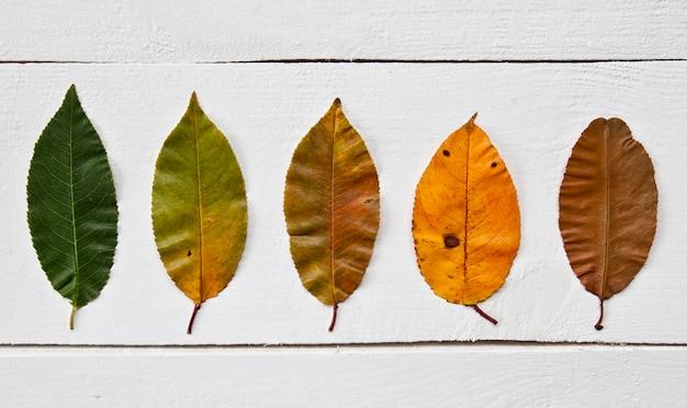 Liście zmieniają kolor z zielonego na brązowy