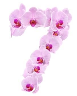 List 7 z kwiatów orchidei. na białym tle