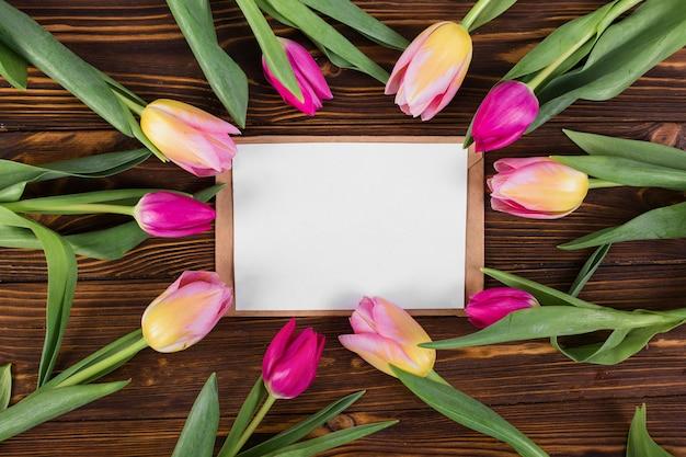 List ramka wokół tulipanów