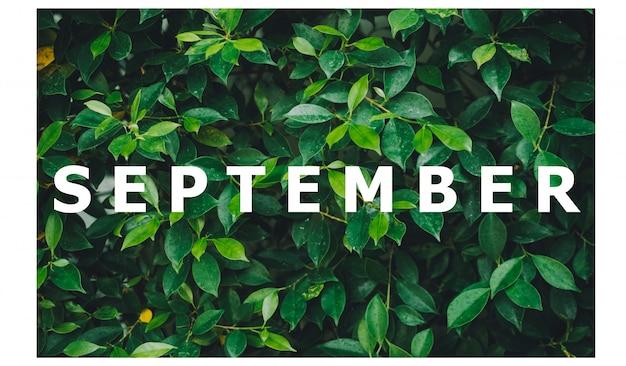 Lista miesięcy kalendarzowych zaprojektowany na naturalnym zielonym tle liścia