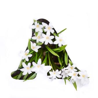 Litera a alfabetu angielskiego małych białych kwiatów chionodoxa