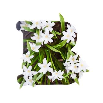 Litera b alfabetu angielskiego małych białych kwiatów chionodoxa