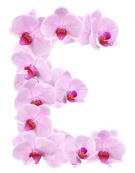 Litera e z kwiatów orchidei. na białym tle