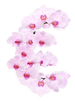 Litera eur z kwiatów orchidei. na białym tle
