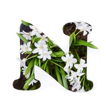 Litera n alfabetu angielskiego małych białych kwiatów chionodoxa