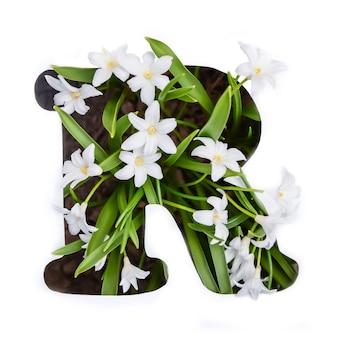 Litera r alfabetu angielskiego małych białych kwiatów chionodoxa