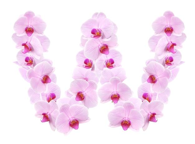 Litera wz kwiatów orchidei. na białym tle