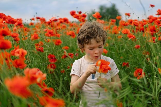 Little boy bawi się w pięknym polu czerwonych maków.