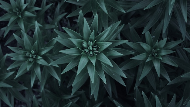 Łodyga i liście lilii ogrodowej. kiełkować lilię z bliska.