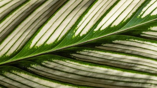 Łodyga liścia rośliny z teksturą