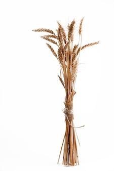 Łodygi kłosów pszenicy, odizolowane na białym tle