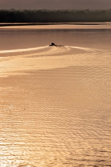 Łódź tworzy fale na złotych wodach rzeki o wschodzie słońca. itanhaem, stan sao paulo, brazylia