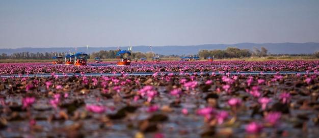 Łódź u wybrzeży morza czerwonego lotosu udonthani, tajlandia