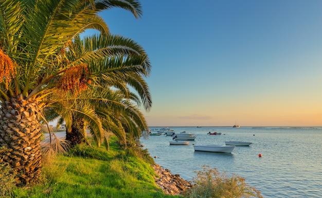 Łodzie rybackie na morzu, palmy na plaży. portugalski tradycyjny pejzaż morski.