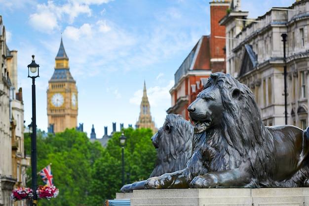 Londyn trafalgar square lion w wielkiej brytanii