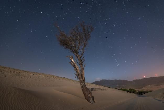 Lonely suche drzewo na wydmach obok drogi w nocy na południu hiszpanii