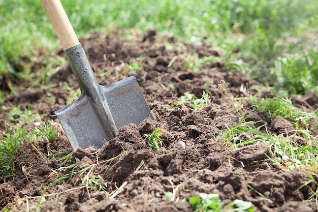 Łopata w ziemi w ogrodzie.