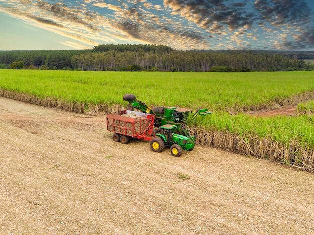 Lotnicze pole trzciny cukrowej w brazylii i pracy ciągnika