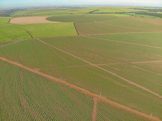 Lotnicze pole trzciny cukrowej w brazylii