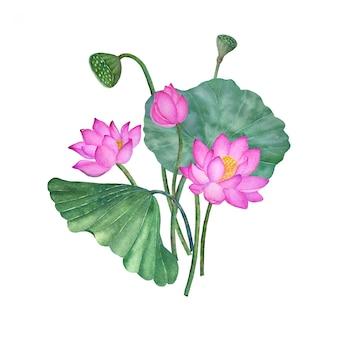 Lotos i lilia wodna na białym tle