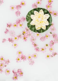 Lotos otoczony różowymi kwiatami unoszącymi się na mleku