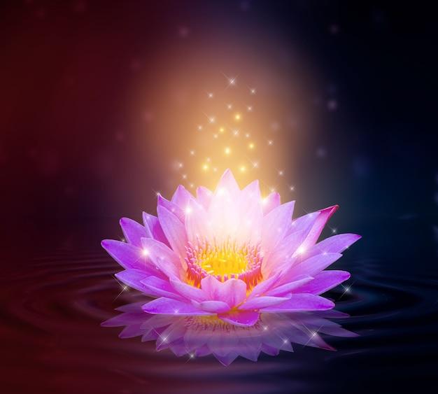 Lotus pink jasnofioletowe pływające światło blask fioletowe tło