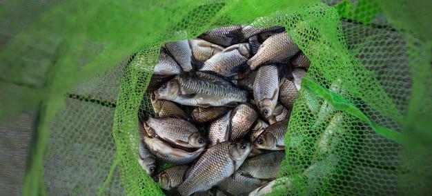 Łowienie karpia z klatką rybacką