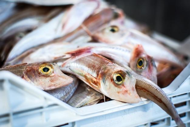 Lśnić ryb na targu rybnym