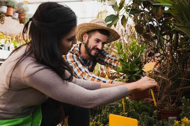 Ludzie aranżacji roślin w szklarni