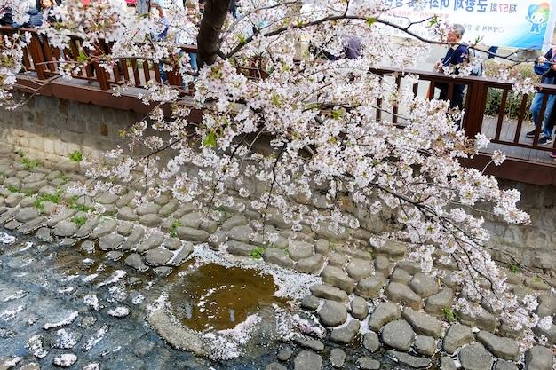 Ludzie chodzą na festiwalu jinhae gunhangje w busan w korei.