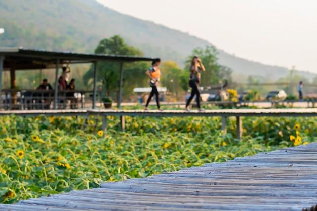 Ludzie chodzą po chodniku z polami słonecznika poniżej.