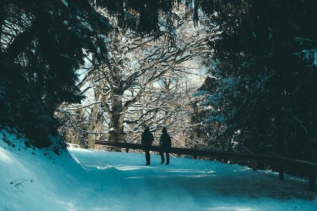 Ludzie chodzą po śnieżnej ścieżce z balustradami pod baldachimem drzew