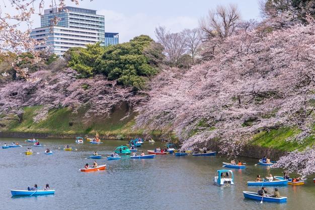 Ludzie jadą łodzią wiosłową po kanale chidorigafuchi, oglądając kwiat wiśni.