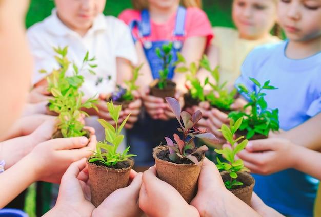 Ludzie ręce bańki roślin pielęgnować środowisko