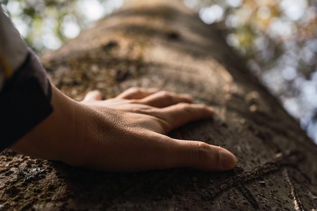 Ludzie są zaniepokojeni przyrodą i środowiskiem. dłoń dotyka pnia drzewa w lesie.