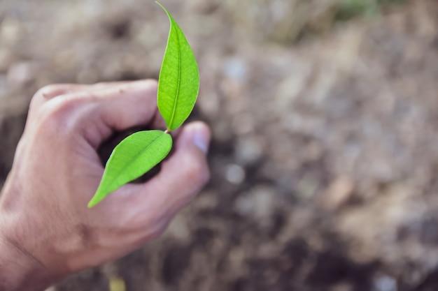 Ludzie sadzą drzewa wzrost, podlewanie roślin i sadzenie drzew