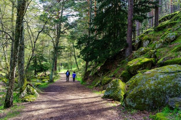 Ludzie wędrujący leśną ścieżką między wysokimi drzewami a dużymi skałami