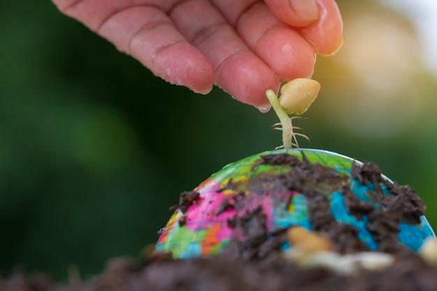 Ludzie wręczają nawadniać młodej obsiewowej rośliny