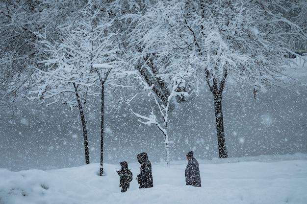 Ludzie z psami spacerują po parku podczas opadów śniegu