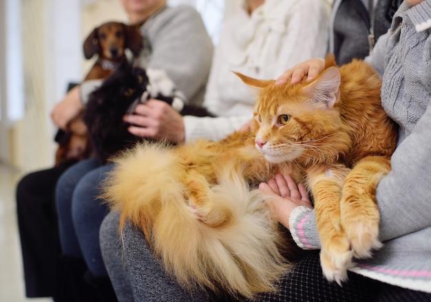 Ludzie ze swoimi zwierzętami czekają na badania lekarskie w klinice weterynaryjnej. zdrowie zwierząt