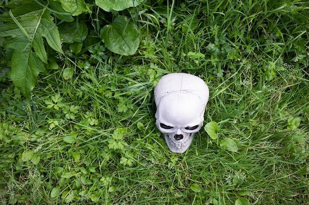 Ludzka czaszka leżąca w zielonej trawie, widok z góry.
