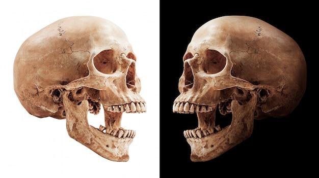 Ludzka czaszka na białym tle