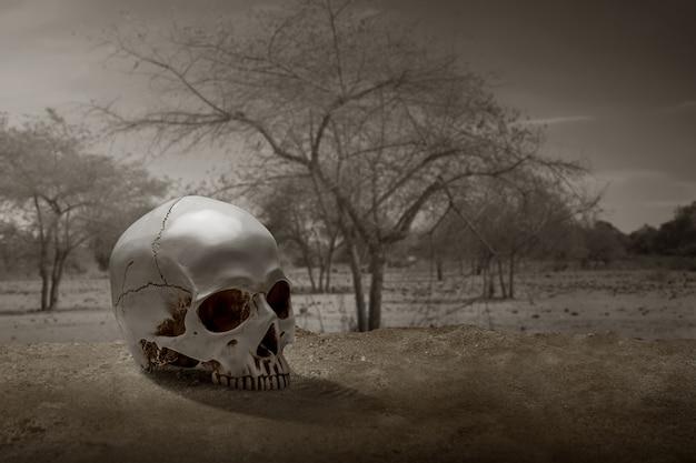 Ludzka czaszka na ziemi z dramatyczną sceną