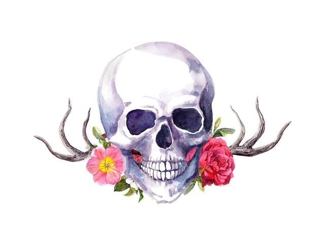 Ludzka czaszka z rogami jelenia i kwiatami w stylu vintage. akwarela