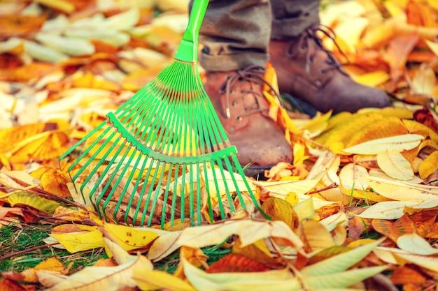 Ludzka grabie żółte opadłe liście w jesiennym ogrodzie