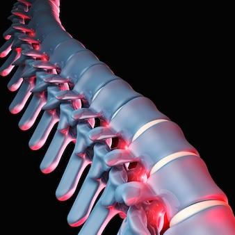 Ludzka kość kręgowa 3d